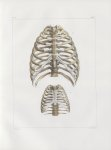 Planche 10 - Thorax, assemblages de côtes et sternum - plan antérieur - Traité complet de l'anatomie [...]