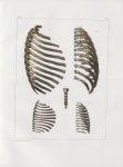 Planche 12 - Thorax, assemblages de côtes et sternum - Traité complet de l'anatomie de l'homme, par  [...]