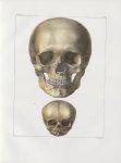 Planche 14 - Têtes - Ovale antérieur - Traité complet de l'anatomie de l'homme, par les Drs Bourgery [...]