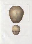 Planche 15 - Têtes - Ovale supérieur - Traité complet de l'anatomie de l'homme, par les Drs Bourgery [...]