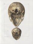 Planche 16 - Têtes - Ovale inférieur - Traité complet de l'anatomie de l'homme, par les Drs Bourgery [...]