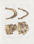 Planche 27 - Os de la tête - Coupe de cavités et de sinus, machoire inférieure. Adulte (grandeur nat [...]