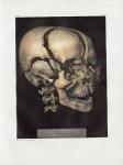 Planche 30 - Tête de squelette, les os écartés - Traité complet de l'anatomie de l'homme, par les Dr [...]