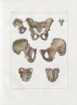Planche 33 - Détails d'os du bassin - Traité complet de l'anatomie de l'homme, par les Drs Bourgery  [...]