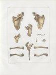 Planche 34 - Omoplate et clavicule - Traité complet de l'anatomie de l'homme, par les Drs Bourgery e [...]