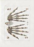 Planche 36 - Main - Traité complet de l'anatomie de l'homme, par les Drs Bourgery et Claude Bernard  [...]
