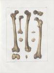 Planche 37 - Fémur et rotule - Traité complet de l'anatomie de l'homme, par les Drs Bourgery et Clau [...]