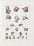Planche 41 - Os du tarse - Traité complet de l'anatomie de l'homme, par les Drs Bourgery et Claude B [...]