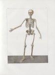 Planche 44 - Sujet complet de syndesmologie - Plan antérieur - Traité complet de l'anatomie de l'hom [...]