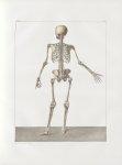 Planche 45 - Sujet complet de syndesmologie - Plan postérieur - Traité complet de l'anatomie de l'ho [...]