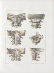 Planche 47 - Articulations céphalo-rachidiennes - Traité complet de l'anatomie de l'homme, par les D [...]