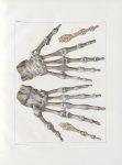 Planche 55 - Articulations de la main - Traité complet de l'anatomie de l'homme, par les Drs Bourger [...]
