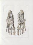Planche 58 - Ligamens du pied - Traité complet de l'anatomie de l'homme, par les Drs Bourgery et Cla [...]