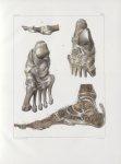 Planche 59 - Articulations et ligamens profonds du pied - Traité complet de l'anatomie de l'homme, p [...]