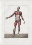 Planche 60 - Sujet complet de myologie - Plan antérieur - Traité complet de l'anatomie de l'homme, p [...]