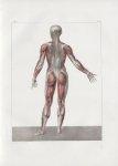 Planche 61 - Sujet complet de myologie - Plan postérieur - Traité complet de l'anatomie de l'homme,  [...]