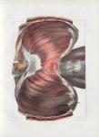 Planche 77 - Diaphragme - Plan antérieur - Traité complet de l'anatomie de l'homme, par les Drs Bour [...]