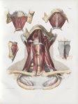Planche 90 - Muscles du cou - Traité complet de l'anatomie de l'homme, par les Drs Bourgery et Claud [...]