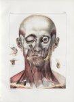 Planche 94 - Muscles de la tête et du cou - Plan antérieur. - Couche profonde - Traité complet de l' [...]