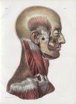Planche 96 - Muscles de la tête et du cou - Plan latéral. - Couche profonde - Traité complet de l'an [...]