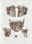 Planche 97 - Muscles masséter et ptérygoïdiens - Traité complet de l'anatomie de l'homme, par les Dr [...]