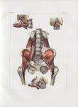 Planche 103 - Muscles du bassin - Traité complet de l'anatomie de l'homme, par les Drs Bourgery et C [...]