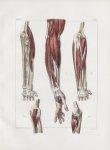 Planche 118 - Muscles de l'avant-bras - Muscles de l'avant-bras à divers plans - Traité complet de l [...]