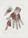 Planche 120 - Muscles de la main - Deuxième couche de la face palmaire - Traité complet de l'anatomi [...]