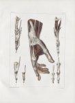 Planche 123 - Muscles de la main - Plan radial - Traité complet de l'anatomie de l'homme, par les Dr [...]