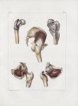 Planche 126 - Muscles pelvi-fémoraux - Traité complet de l'anatomie de l'homme, par les Drs Bourgery [...]