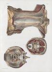Planche 147 - Aponévroses du cou - Traité complet de l'anatomie de l'homme, par les Drs Bourgery et  [...]
