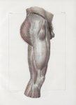 Planche 153 - Aponévroses externes d'enveloppe de la cuisse - Traité complet de l'anatomie de l'homm [...]