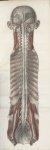 Planche 1 - Enveloppes encéphalo-rachidiennes - Plan antérieur - Traité complet de l'anatomie de l'h [...]