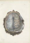 Planche 4 - Enveloppes encéphalo-rachidiennes - Plan supérieur - Traité complet de l'anatomie de l'h [...]