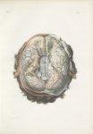Planche 5 - Enveloppes encéphalo-rachidiennes - Plan inférieur - Traité complet de l'anatomie de l'h [...]