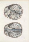 Planche 6 - Dure-mère encéphalique - Traité complet de l'anatomie de l'homme, par les Drs Bourgery e [...]