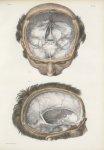 Planche 7 - Dure-mère encéphalique - Traité complet de l'anatomie de l'homme, par les Drs Bourgery e [...]