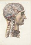 Planche 8 - Enveloppes céphalo-rachidiennes - Plan latéral - Traité complet de l'anatomie de l'homme [...]