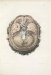 Planche 16 - Surface extérieure de l'encéphale - Encéphale (cerveau, cervelet, isthme de l'encéphale [...]