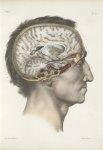 Planche 22 - Coupe verticale de l'encéphale - Traité complet de l'anatomie de l'homme, par les Drs B [...]