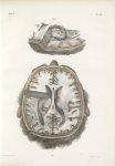 Planche 28 - Ensemble des ventricules latéraux - Traité complet de l'anatomie de l'homme, par les Dr [...]