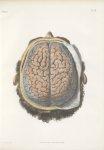 Planche 30 - Système vasculaire, artériel du cerveau, vu par la partie supérieure - Traité complet d [...]