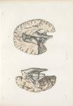 Planche 34 - Névrologie - Traité complet de l'anatomie de l'homme, par les Drs Bourgery et Claude Be [...]