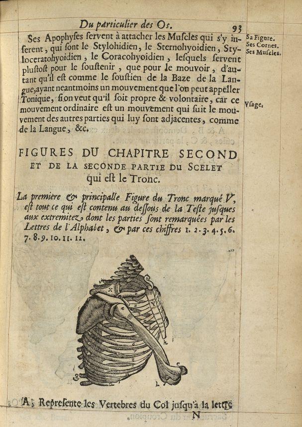 Figures du Chapitre second et de la seconde partie du scelet que est le tronc - L'Oeconomie chirurgi [...] -  - med05207x0120