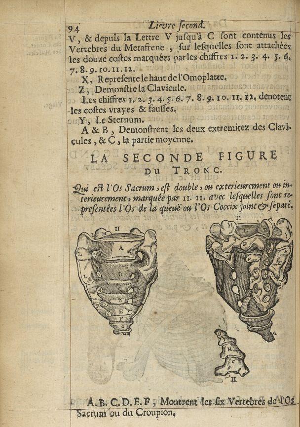 La seconde Figure du tronc. Qui est l'os sacrum, est double, ou exterieurement ou interieurement, av [...] -  - med05207x0121