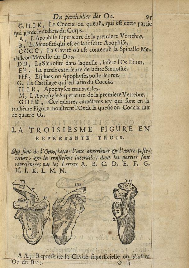 La troisiesme Figure en represente trois. Qui sont de l'omoplate, l'une anterieure & l'autre posteri [...] -  - med05207x0122