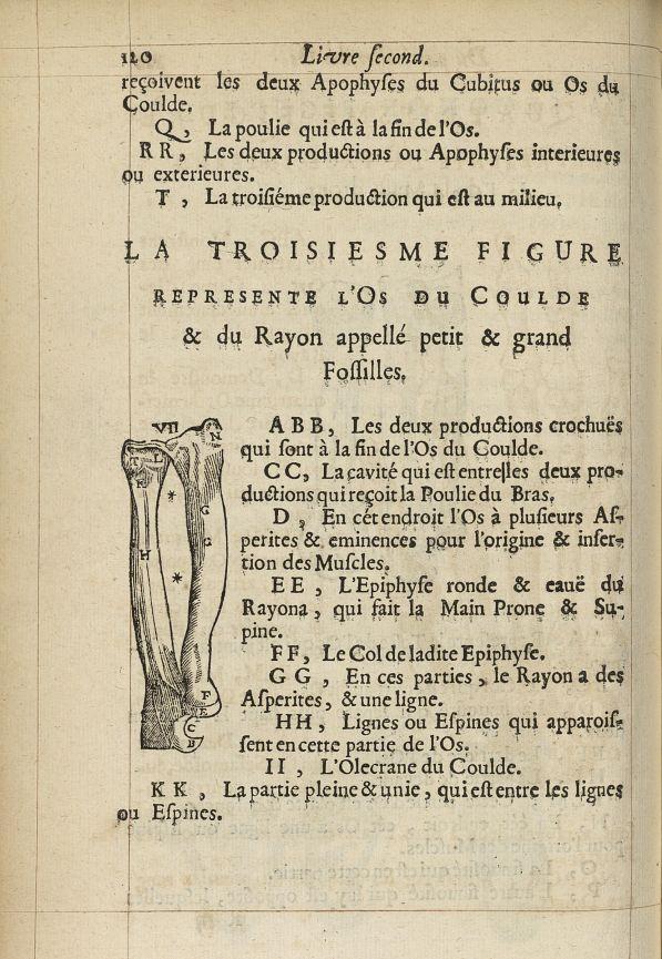 La troisiesme Figure represente l'os du coulde & du rayon appellé petit & grand fossilles - L'Oecono [...] -  - med05207x0147