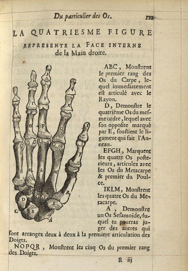 La quatriesme Figure represente la face interne de la main droite - L'Oeconomie chirurgicale, pour l [...] -  - med05207x0148