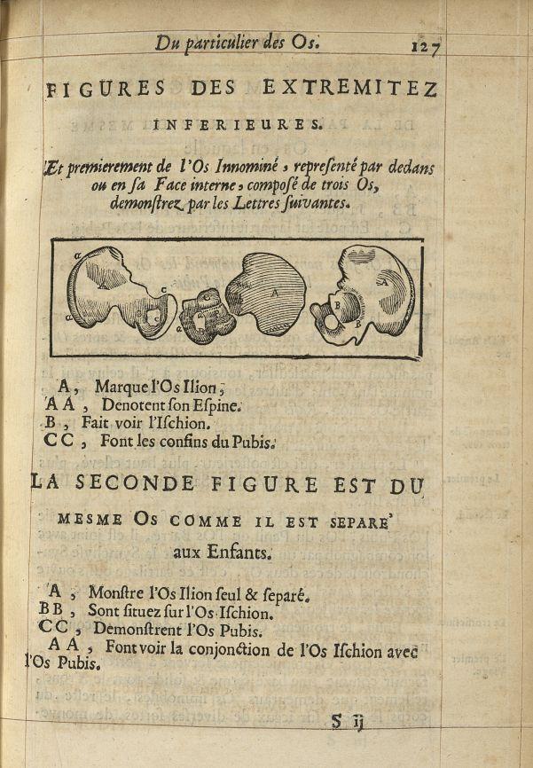 Figures des extremitez inferieures. Et premierement l'os innominé, representé par dedans ou en sa fa [...] -  - med05207x0156