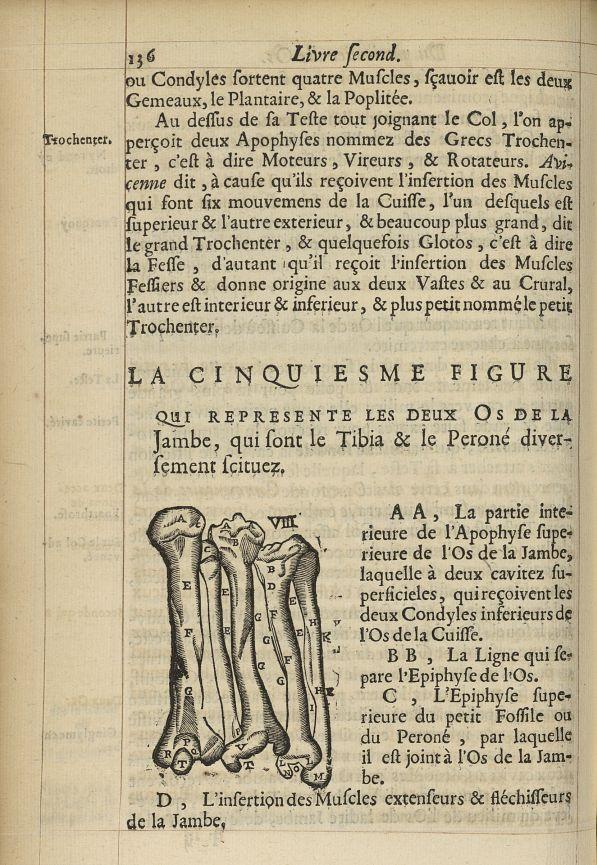 La cinquiesme Figure qui represente les deux os de la jambe, qui sont le tibia & le peroné - L'Oecon [...] -  - med05207x0165